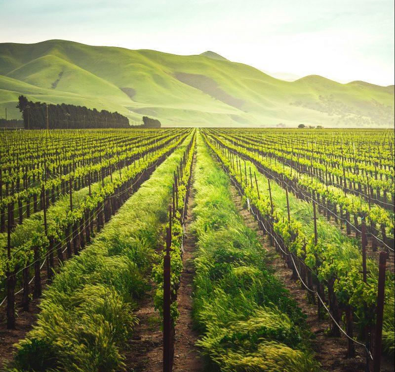 Vad innebär det att ett vin är ekologiskt